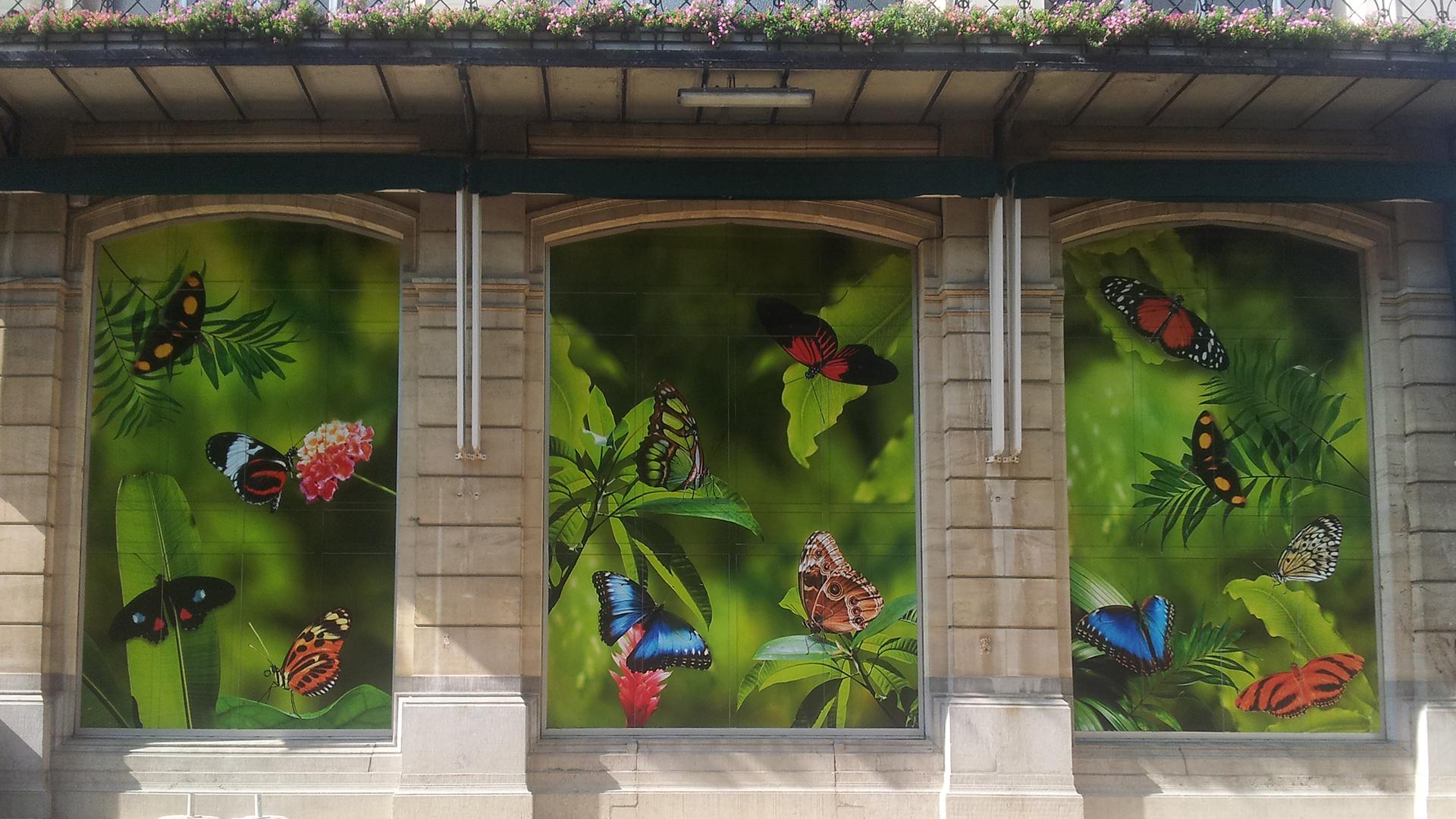 Raamdecoratie zoo